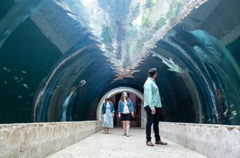 Todo sobre el Dallas World Aquarium